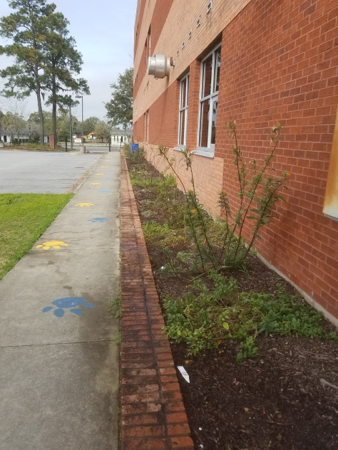NCHS Cleanup 7