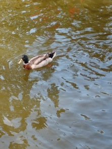 NCHS duck pond 23