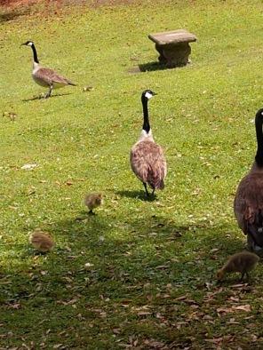 NCHS duck pond 34